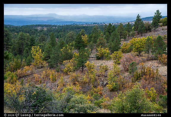 Forest in autumn on Pajarito Mesa. Bandelier National Monument, New Mexico, USA (color)
