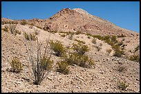 Occotillo and Picacho Mountain baren slopes. Organ Mountains Desert Peaks National Monument, New Mexico, USA ( color)