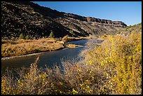 Shrubs in autum foliage and cliffs, Orilla Verde. Rio Grande Del Norte National Monument, New Mexico, USA ( )