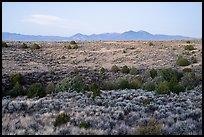 Sagebrush and juniper, Taos Valley Overlook. Rio Grande Del Norte National Monument, New Mexico, USA ( )