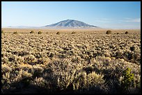 Sagebrush on Taos Plateau and Ute Mountain. Rio Grande Del Norte National Monument, New Mexico, USA ( color)