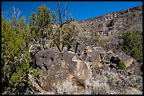 Boulder with petrogphys and canyon walls. Rio Grande Del Norte National Monument, New Mexico, USA ( color)