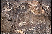 Close-up of animal petroglyps. Rio Grande Del Norte National Monument, New Mexico, USA ( )