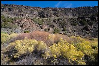 Rabbitbrush in bloom and cliffs, Big Arsenic. Rio Grande Del Norte National Monument, New Mexico, USA ( color)