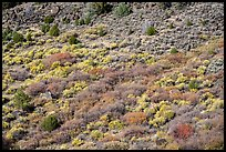 Shurbs with autumn colors from above. Rio Grande Del Norte National Monument, New Mexico, USA ( color)
