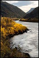 Fall colors on the banks of the Rio Grande River. Rio Grande Del Norte National Monument, New Mexico, USA ( )