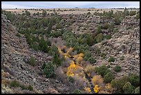Juniper and pocket of trees in autumn foliage in Rio San Antonio. Rio Grande Del Norte National Monument, New Mexico, USA ( color)