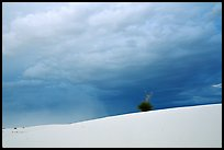 Lone Yucca. White Sands National Park ( color)