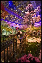 Botanical garden and conservatory with purple light, Bellagio Casino. Las Vegas, Nevada, USA (color)