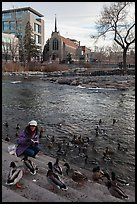Woman feeding ducks on steps of Truckee River. Reno, Nevada, USA (color)