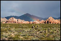 Joshua Trees, Whitney Pocket with rainbow. Gold Butte National Monument, Nevada, USA ( )
