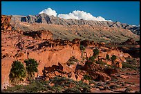 Cliff with palm trees below Little Finland. Gold Butte National Monument, Nevada, USA ( )