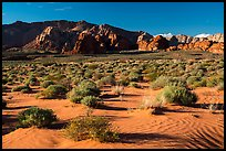 Sand dunes. Gold Butte National Monument, Nevada, USA ( )
