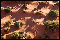 Dunes from above. Gold Butte National Monument, Nevada, USA ( )