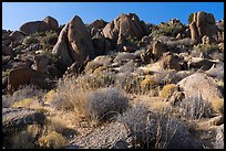 Ridge with boulders, early morning, Gold Butte Peak. Gold Butte National Monument, Nevada, USA ( )