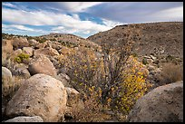 Boulder-covered slopes and shrubs in autumn foliage, Shooting Gallery. Basin And Range National Monument, Nevada, USA ( color)