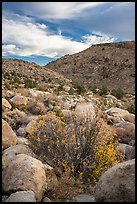 Valley with Boulders and shrubs in autumn foliage, Shooting Gallery. Basin And Range National Monument, Nevada, USA ( )