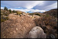 Boulder with densely packed petrogphys in valley, Shooting Gallery. Basin And Range National Monument, Nevada, USA ( )