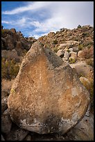 Pointed rock with petroglyphs, Shooting Gallery. Basin And Range National Monument, Nevada, USA ( )