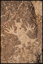 Close-up of horned lizard petroglyph, Shooting Gallery. Basin And Range National Monument, Nevada, USA ( color)