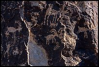 Sheep petroglyphs and light, Shooting Gallery. Basin And Range National Monument, Nevada, USA ( color)
