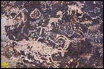 Close up of bighorn sheep petroglyphs, Shooting Gallery. Basin And Range National Monument, Nevada, USA ( )