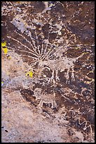 Close up of Starburst deer petroglyph. Basin And Range National Monument, Nevada, USA ( color)