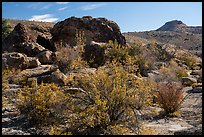 Shurbs in autum and rock with Starburst deer panel. Basin And Range National Monument, Nevada, USA ( )