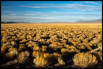 Coal Valley, late afternoon. Basin And Range National Monument, Nevada, USA ( )