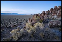 Blooms and volcanic ash boulders, Garden Valley. Basin And Range National Monument, Nevada, USA ( )
