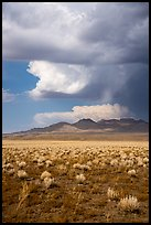 Clearing stom clouds over mountains, Seaman Range. Basin And Range National Monument, Nevada, USA ( )