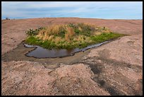 Potholes and vegetation on Enchanted Rock. Texas, USA ( color)