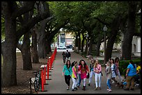Women students in tree-covered alley, University of Texas. Austin, Texas, USA ( color)