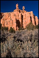 Sagebrush and pink cliffs, Red Canyon. Utah, USA ( color)