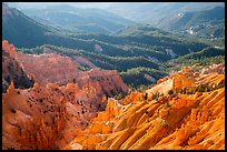 Eroded ridges and forest. Cedar Breaks National Monument, Utah, USA ( color)