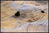 Shrubs and swirling yellow sandstone. Grand Staircase Escalante National Monument, Utah, USA ( color)