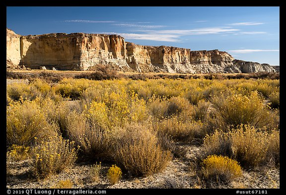 Rabbitbrush and cliffs bordering Wahweap Wash. Grand Staircase Escalante National Monument, Utah, USA (color)