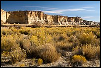 Rabbitbrush and cliffs bordering Wahweap Wash. Grand Staircase Escalante National Monument, Utah, USA ( color)