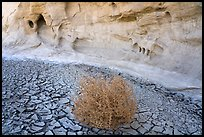 Wash with cracked mud, tumbleweed, and cliff. Grand Staircase Escalante National Monument, Utah, USA ( color)