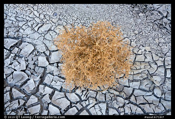 Close-up of tumbleweed, and cracked dried mud. Grand Staircase Escalante National Monument, Utah, USA (color)
