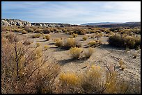 Desert shrubs in Wahweap Wash. Grand Staircase Escalante National Monument, Utah, USA ( color)