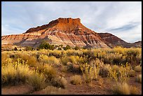 Shrubs and butte, Old Pahrea. Grand Staircase Escalante National Monument, Utah, USA ( color)