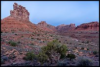Juniper, mesas and buttes at dawn, Valley of the Gods. Bears Ears National Monument, Utah, USA ( )
