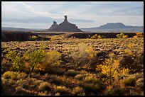 Autumn foliage and spires, Valley of the Gods. Bears Ears National Monument, Utah, USA ( )