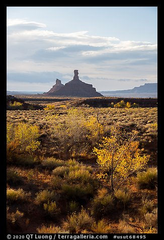 Trees in autumn foliage and spires, Valley of the Gods. Bears Ears National Monument, Utah, USA (color)