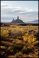 Trees in autumn foliage and spires, Valley of the Gods. Bears Ears National Monument, Utah, USA ( )