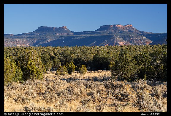 Sage, junipers, and Bears Ears Buttes. Bears Ears National Monument, Utah, USA (color)