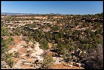Canyons and Bears Ears Buttes in the distance. Bears Ears National Monument, Utah, USA ( )
