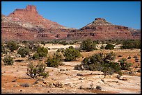 Slickrock and buttes, Soldiers Crossing. Bears Ears National Monument, Utah, USA ( )