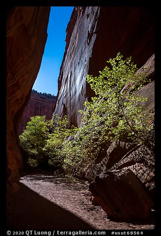Side canyon of Long Canyon sunlit with trees. Grand Staircase Escalante National Monument, Utah, USA (color)